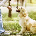 adestramento-cachorro